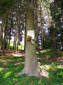 Bildbaum