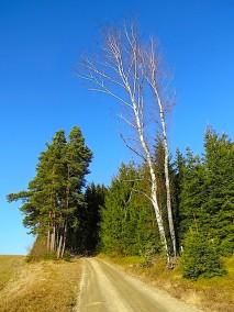 Verschwundener Bildbaum
